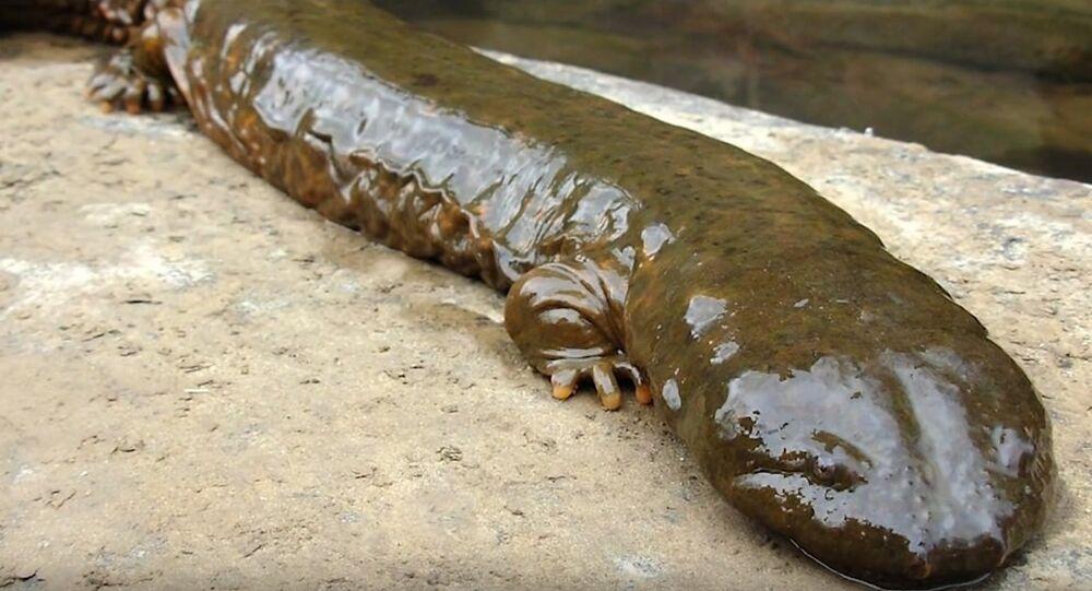 Une salamandre