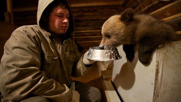 Les biologistes nourrit un ours à la station biologique forêt propre dans le village Bubonitsy - Sputnik France