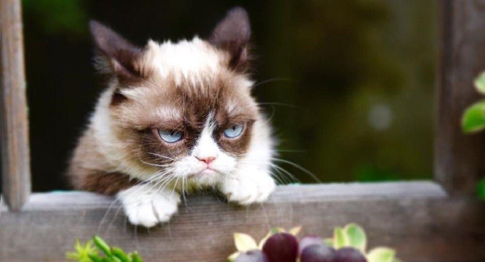 Le Chat Grincheux