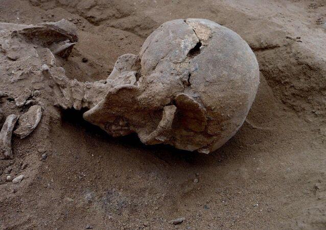 Un squelette fossilisé. Image d'illustration