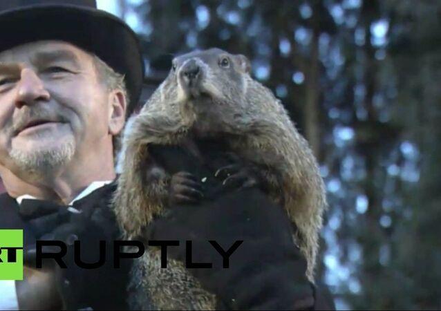 La marmotte Phil n'a pas vu son ombre