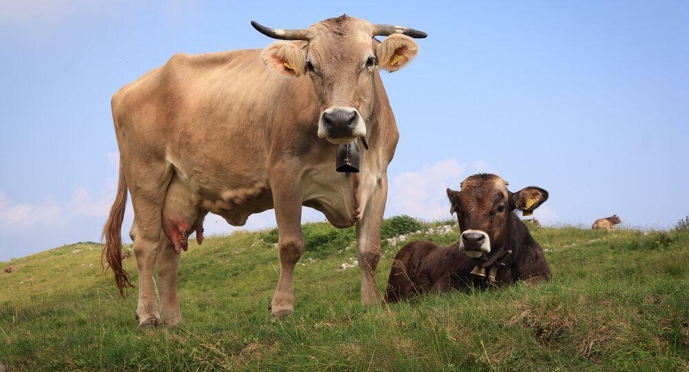 La Russie admet imposer une interdiction sur des fourrages européens