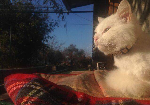 La belle histoire d'un chat de migrants irakiens