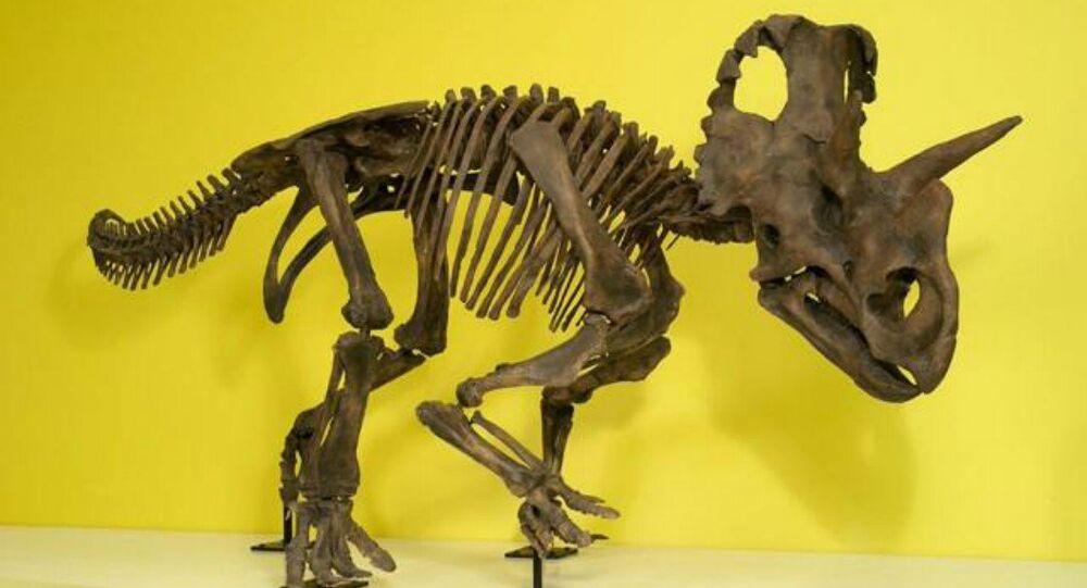 Un dinosaure