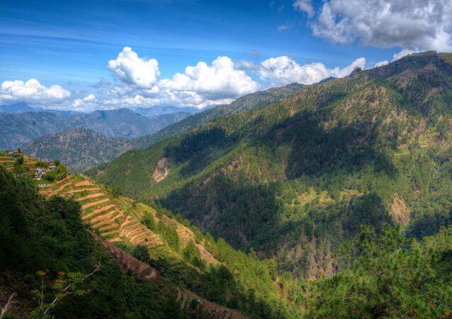 Forêt aux Philippines