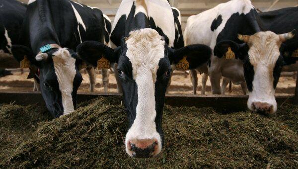 La Russie interdit les importations de viande de boeuf de Roumanie à cause de la maladie de la vache folle