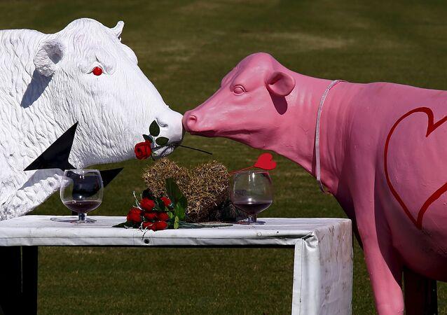 Les sculptures en forme de vaches sont affichées dans un enclos avant de la Saint Valentin à la périphérie de la ville de Nowra, au sud de Sydney, Australie, le 13 Février, 2016