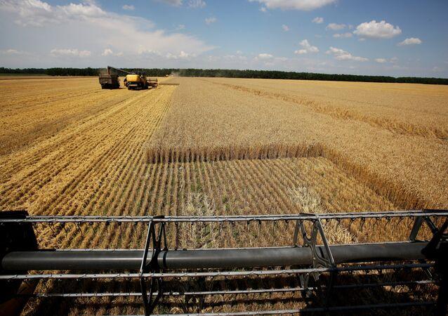La récolte de blé dans les champs de près de la ville russe de Krasnodar