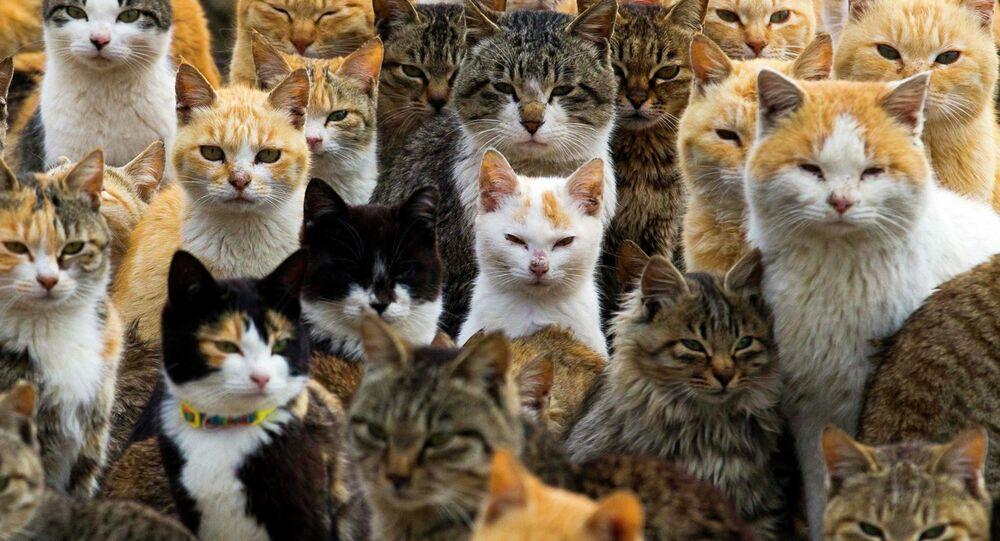 Votre chat a-t-il un accent? Le langage des chats déchiffré d'ici 5 ans