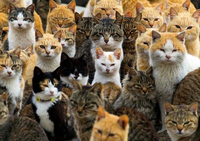 Les chats de l'île japonais d'Aoshima