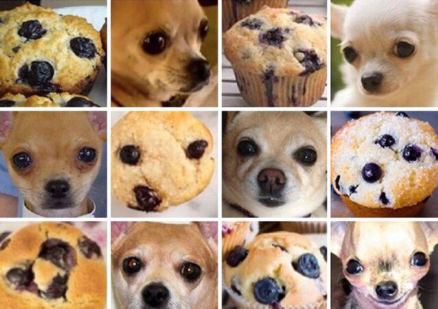 Muffin ou chihuahua?