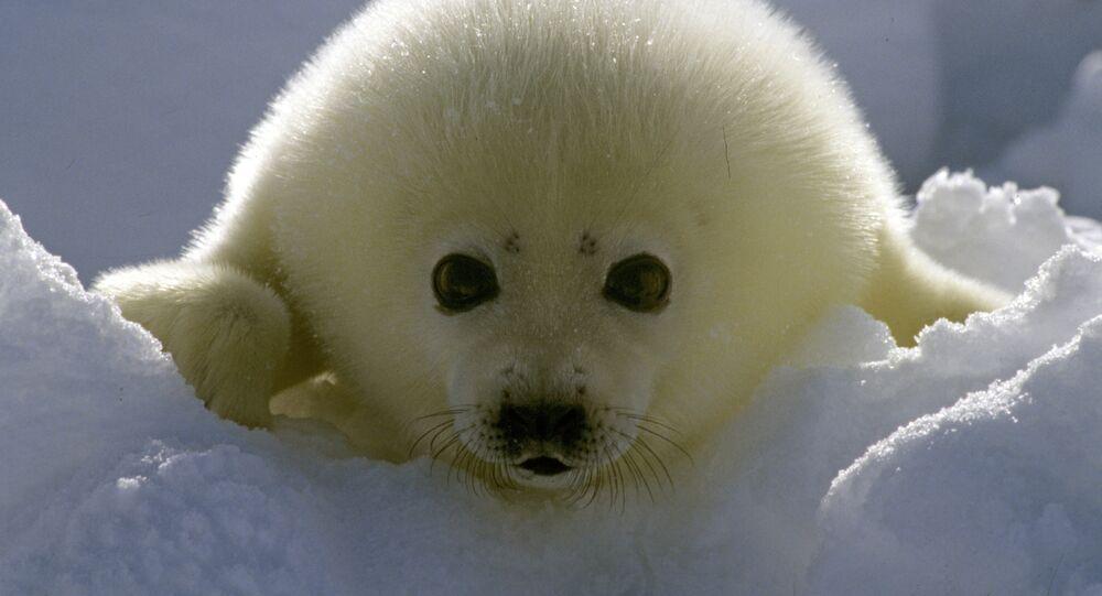 Quel est l'animal le plus mignon du monde?