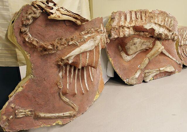 Des fossiles de dinosaures volés