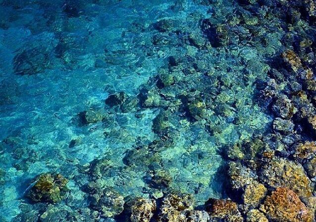 Des organismes vivants découverts sous les profondeurs marines