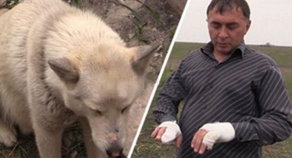 Un Russe capture un loup à mains nues pour sauver ses enfants