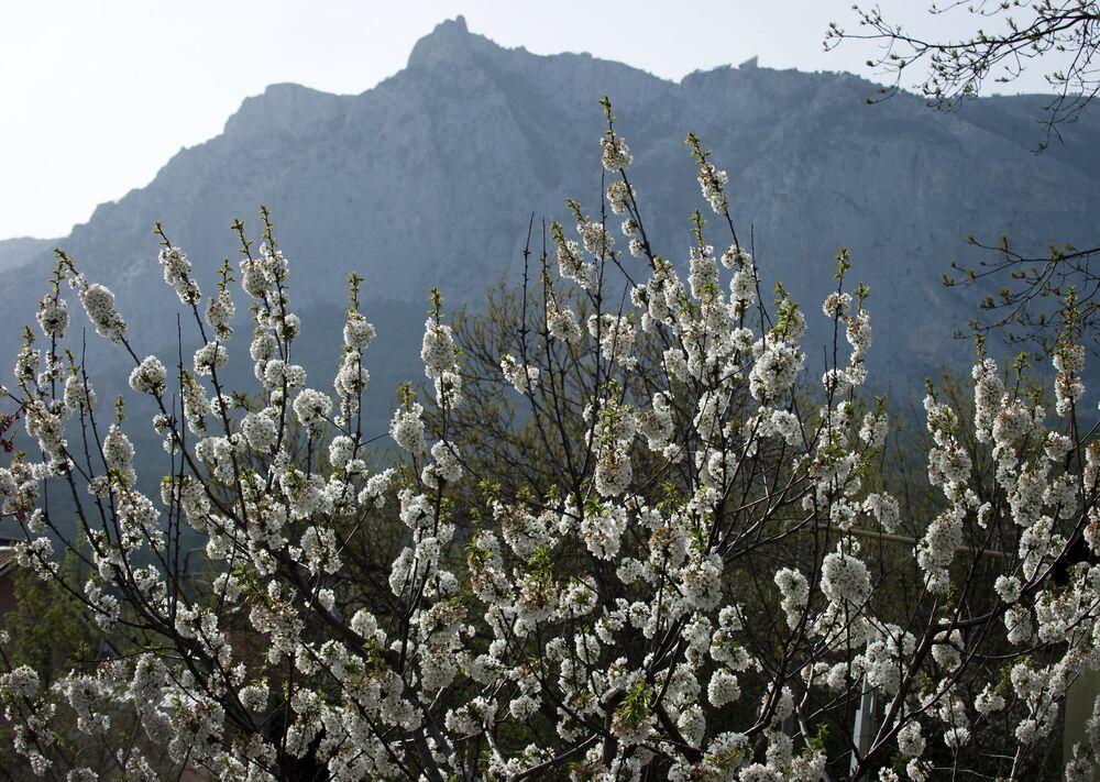 Le printemps en Crimée