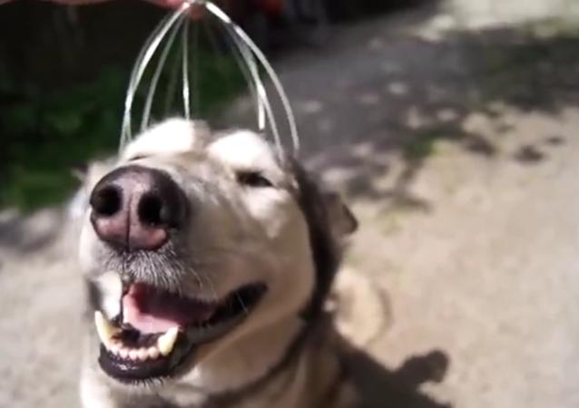 Un chien qui se relaxe
