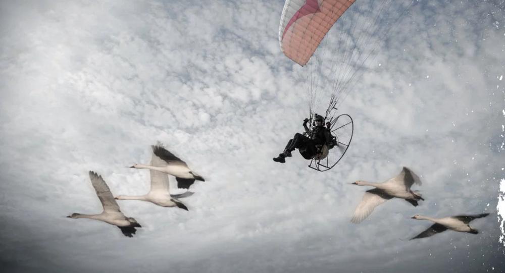 Sacha Dench qui qui va voler avec les cygnes de la toundra russe à Gloucestershire