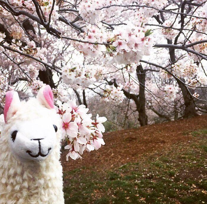Salut le printemps