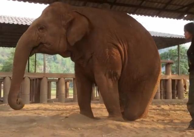 La berceuse qui endort les éléphants