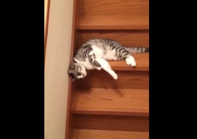 Un chat vraiment paresseux