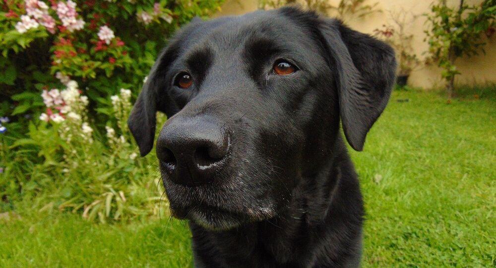 Des pulls multicolores pour aider les chiens noirs à trouver un maître