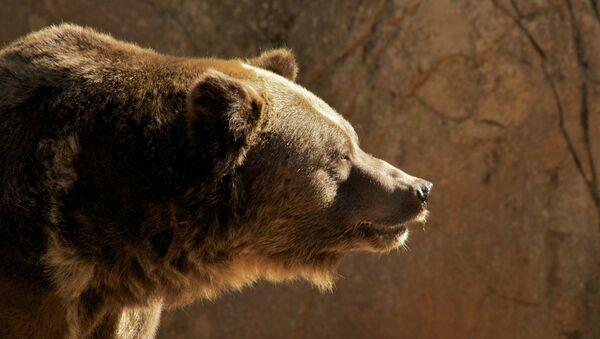 Grizzly Bear - Sputnik France