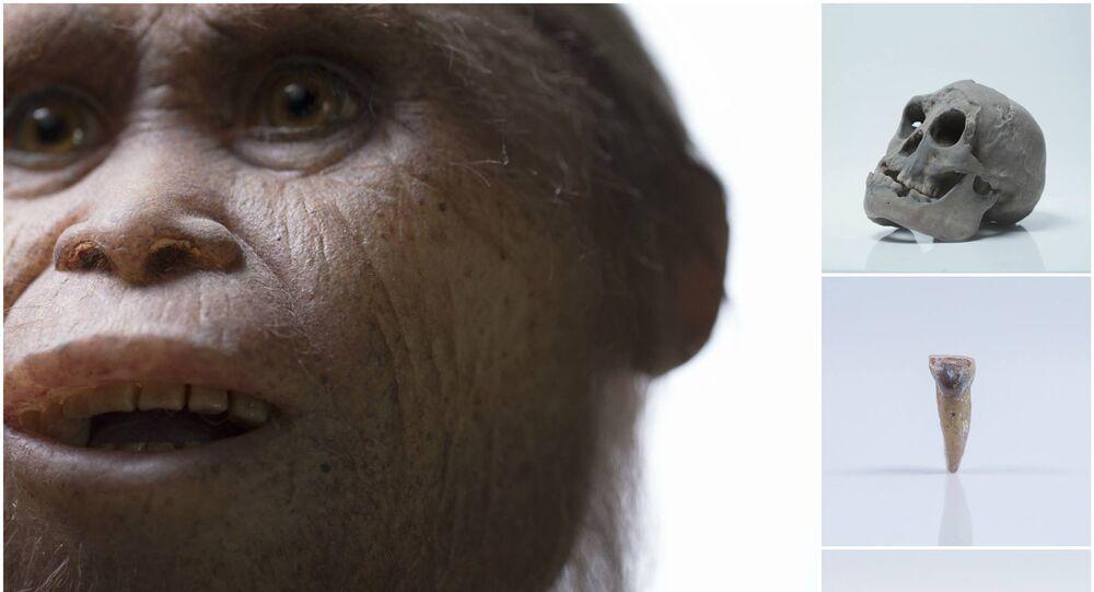 Des restes de l'ancêtre du hobbit découverts en Indonésie