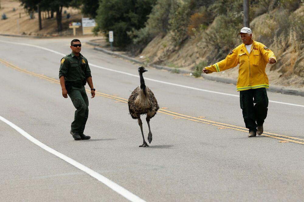 Les incendies de forêt qui se sont déclarés en Californie mettent en danger non seulement les gens mais aussi les animaux et les oiseaux