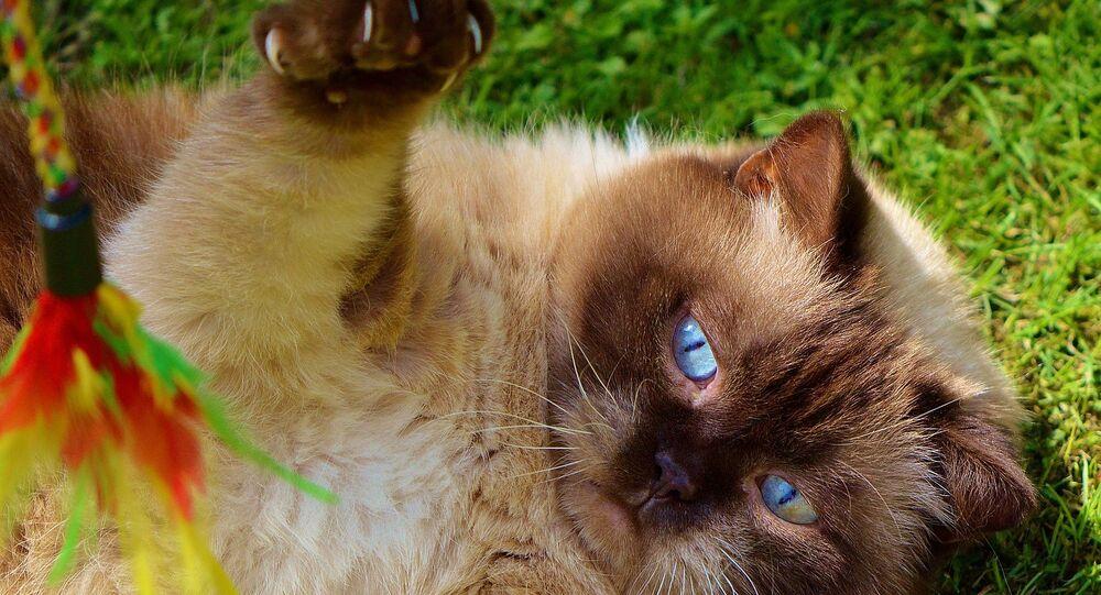 Miaou! Voici la réalité virtuelle pensée… pour les chats