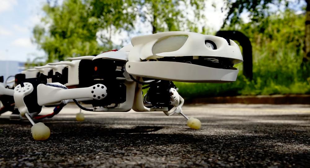 Un robot-salamandre