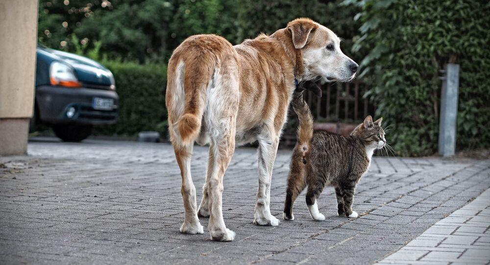 un chien et un chat