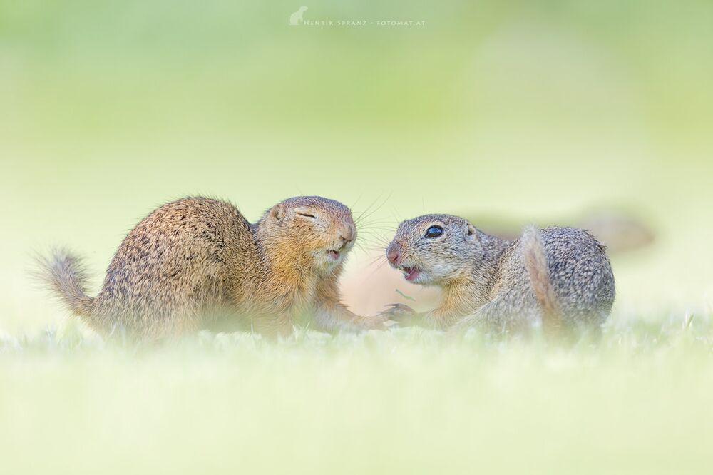 La vie surprenante d'adorables rongeurs