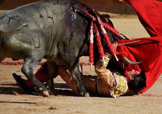 Un taureau avec un matador