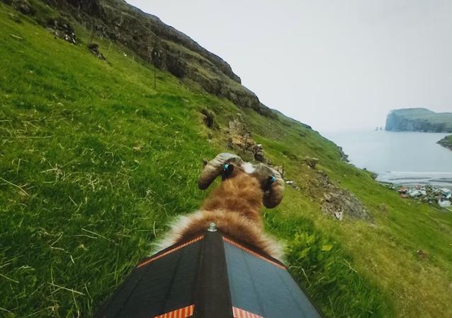 Faute de Google Street View, les moutons photographient les îles Féroé