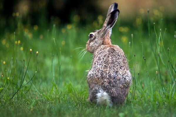 Quoi de neuf dans le monde animal? - Sputnik France