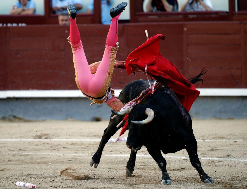 Le matador espagnol Pablo Belando dans l'arène de Las Ventas, à Madride.