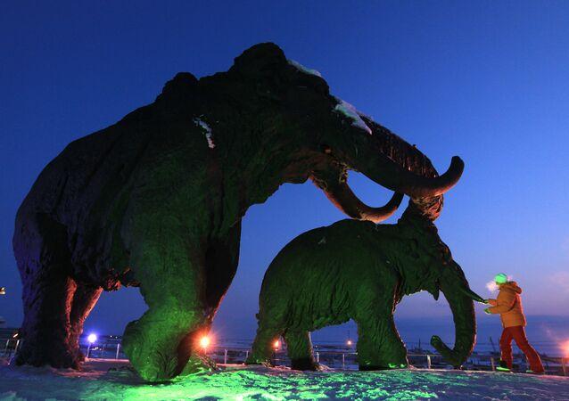 Un «cimetière de mammouths» découvert en Russie