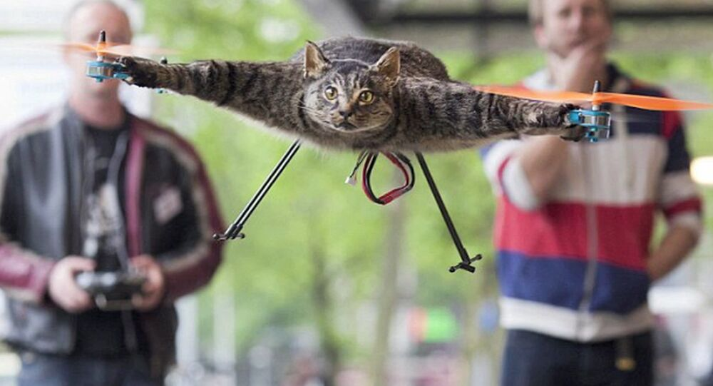 Le chat-drone
