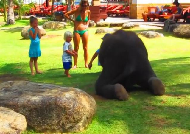 Un éléphanteau rejoint un club pour enfants