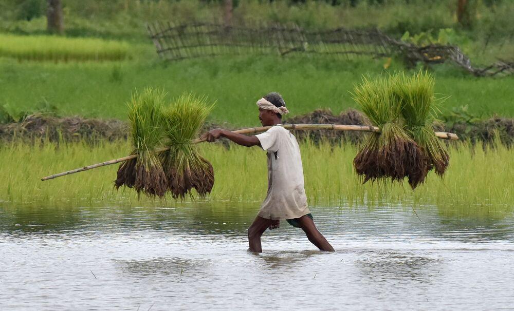 Un fermier indien dans le village de Raha dans l'Etat d'Assam situé dans le nord-est du pays