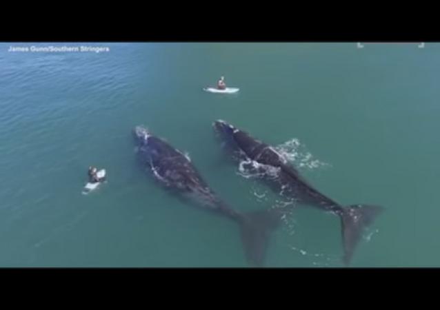 Un Néo-Zélandais nage avec des baleines et se met bêtement en danger