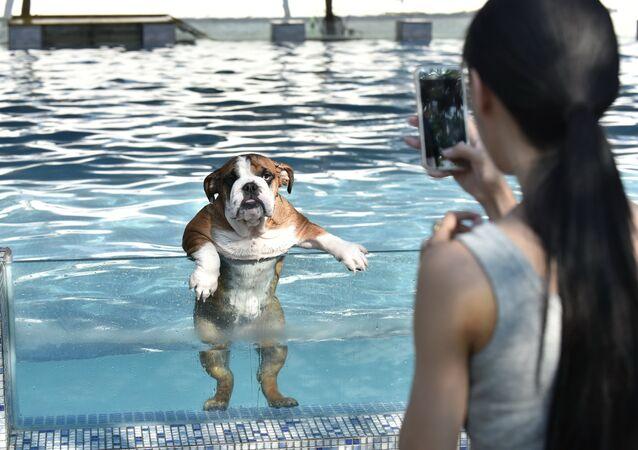 Une piscine pour les chiens est ouverte à Chengdu dans la province chinoise de Sichuan