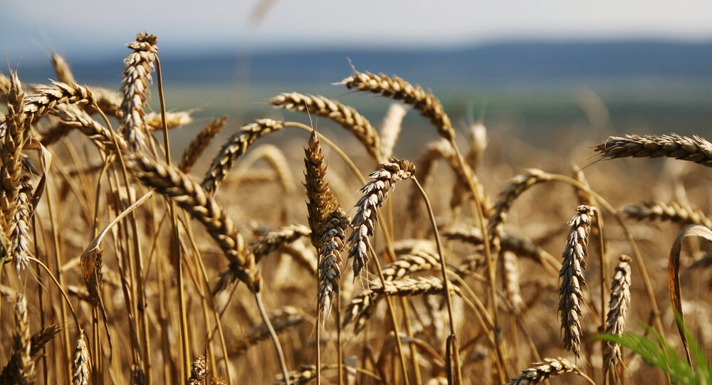 Les sanctions, ou la dolce vita des fermiers russes