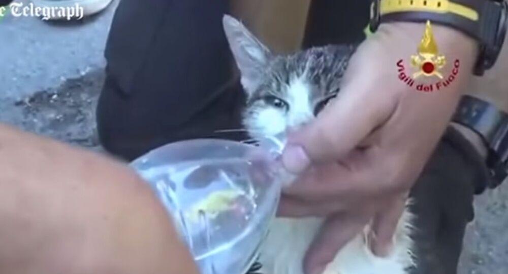 Un chat retrouvé vivant après avoir passé 5 jours dans les décombres d'Amatrice