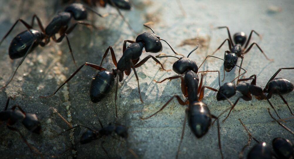 Des fourmis / image d'illustration