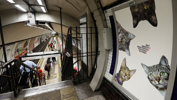 A poster featuring cats, on display, at the Clapham Common Tube station in London, Tuesday, Sept. 13, 2016. - Sputnik France