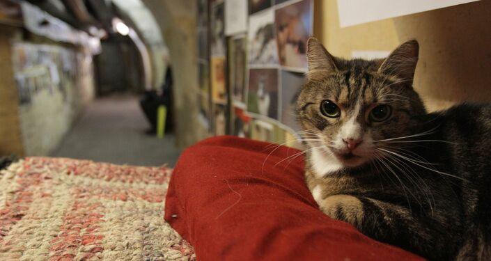Ce chat qui se promène en robot aspirateur Sputnik France