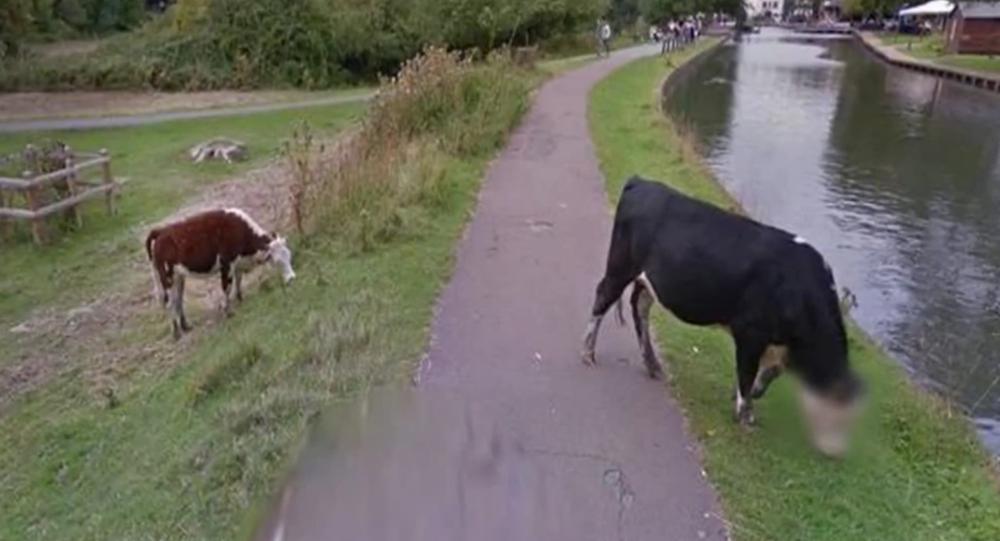 Google préserve la vie privée… d'une vache