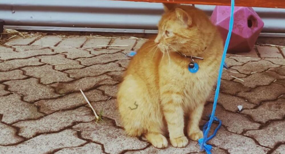 Un chat SDF est devenu policier